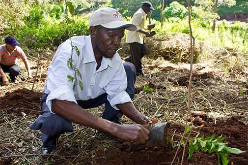 tree-planting-03